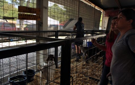 County Fair gives opportunity for those with serious passions