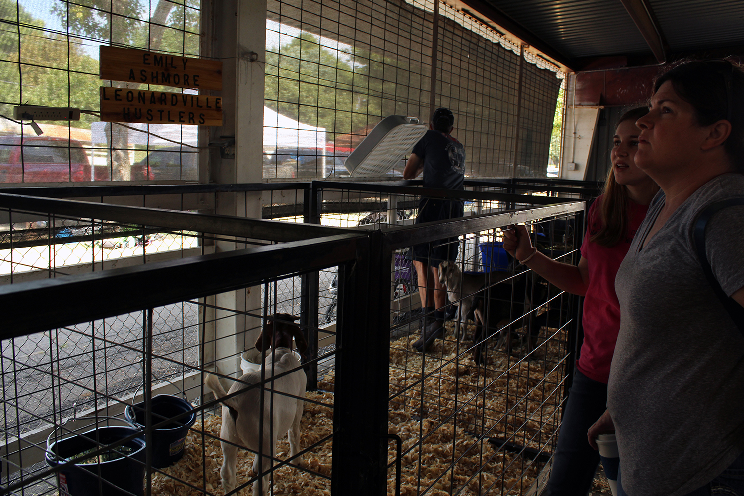 Sophomore Emily Ashmore waits next to her goat while waiting for the live stock judging to start.