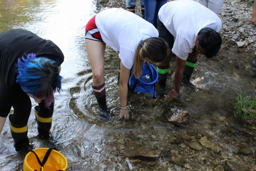 Students bend down to look for anything living in the creek. They went on the creek as part of a field trip to learn about nature's impact on art.